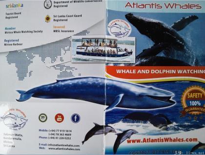 atlantis whales3.jpg