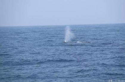whale breathing.jpg