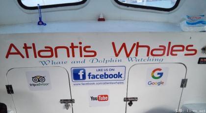 atlantis whales1.jpg