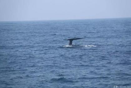 blue whale jumping.jpg