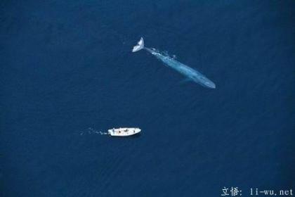 blue whale matara.jpg