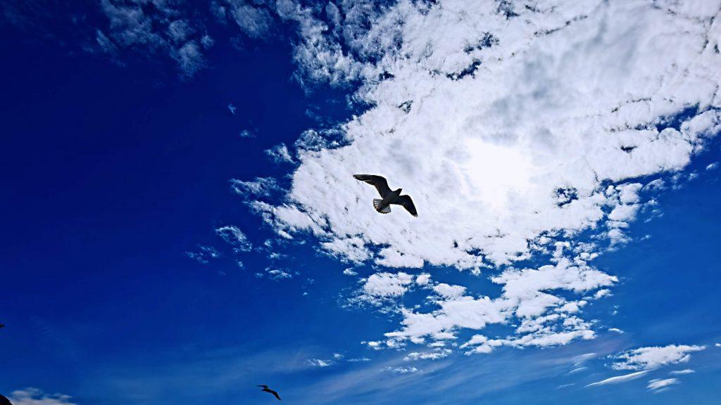 Like Watching Sky 4 1